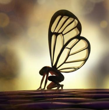 Ночная бабочка. Бабочка - фея, Verish.Net? =)